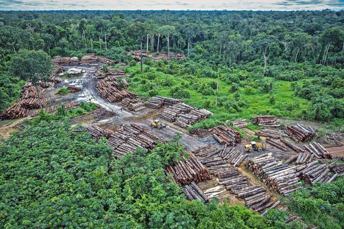Illegal logging on Pirititi indigenous Amazon lands with a repository of round logs on May 8, 2018 Felipe Werneck/Ibama via Flickr via AP (Creative Commons 2.0)